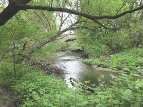 Tacony Creek 1